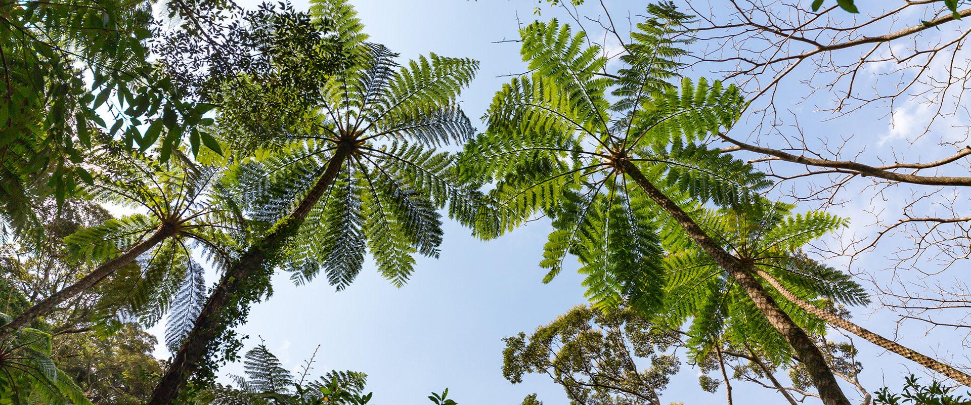 金策原原生林